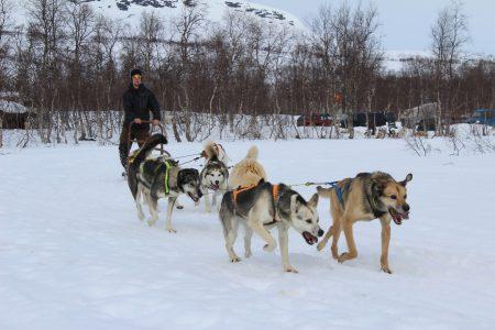 Linus Johansson med hundar lånade av David Gustavsson.